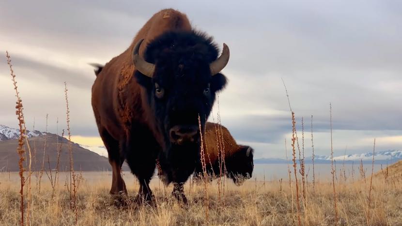 Forza della natura: nuovo video della raccolta Shot on iPhone dedicato alla terra